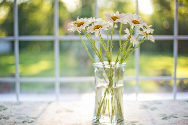 vase of daisies - inexpensive treat